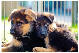 Tier- & Haustierfotografie
